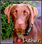 Luther the Blues Hound